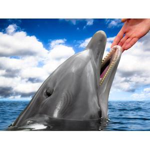 フリー写真, 動物, 哺乳類, イルカ, 手, 人と動物, フォトレタッチ