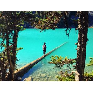 フリー写真, 風景, 湖, 倒木, 人と風景, 後ろ姿, カナダの風景