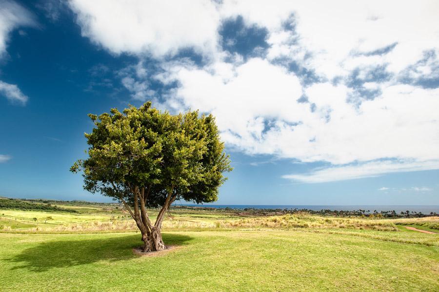 フリー写真 雲と青空と一本の木の風景