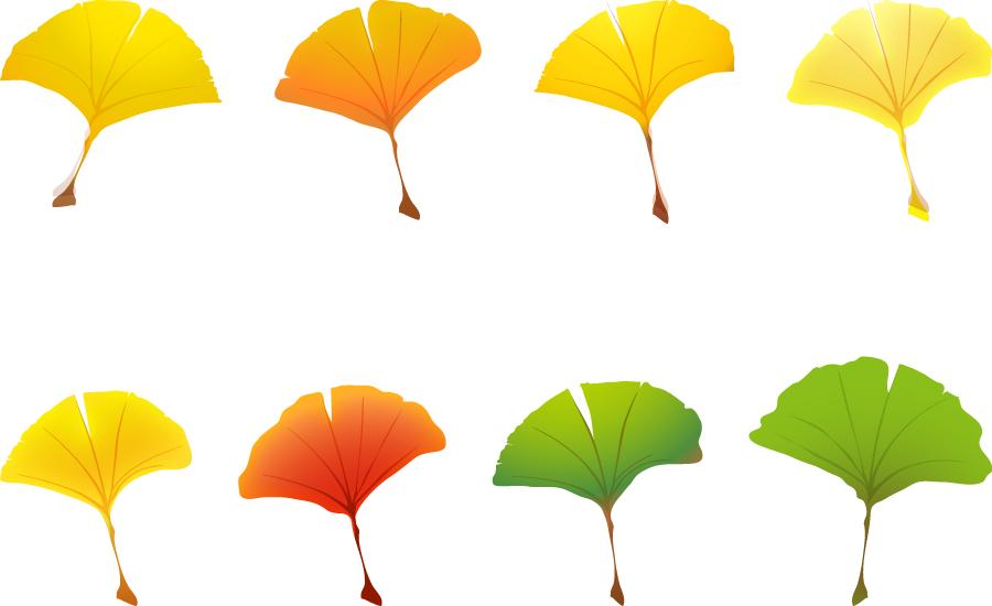 フリーイラスト 春夏秋冬のイチョウの葉のセット