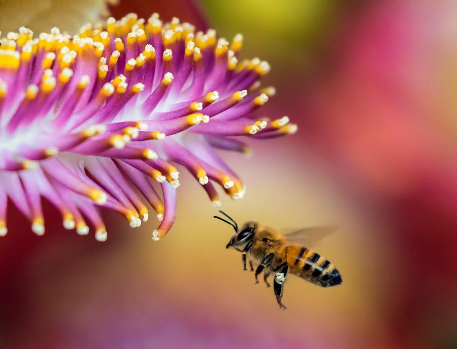 フリー写真 花の側のミツバチ