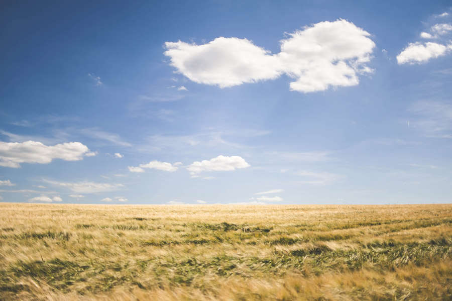 フリー写真 一面の麦畑と雲が浮かぶ青空の風景