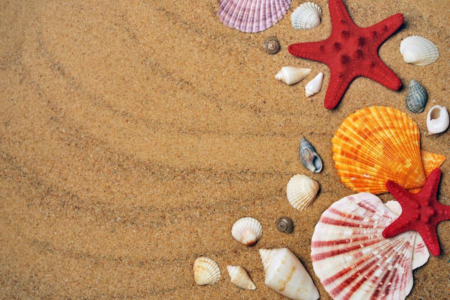フリー写真 砂浜の上の貝殻とヒトデ