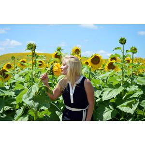 フリー写真, 人物, 女性, 外国人女性, ロシア人, 人と風景, 人と花, 花畑, 植物, 花, 向日葵(ヒマワリ), 金髪(ブロンド), 匂いを嗅ぐ, 横顔, 夏