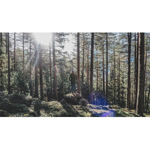 フリー写真, 風景, 森林, 樹木, 岩, 人と風景, 後ろ姿, 太陽光(日光)