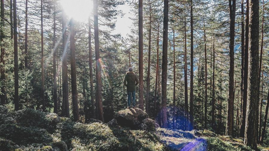 フリー写真 森の木々と岩の上に立つ人物の後ろ姿
