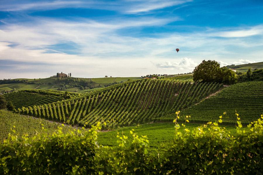 フリー写真 気球とぶどう園が広がる田舎の風景