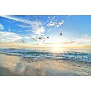 フリー写真, 風景, 自然, 海, 夕暮れ(夕方), 夕日, 鴎(カモメ)
