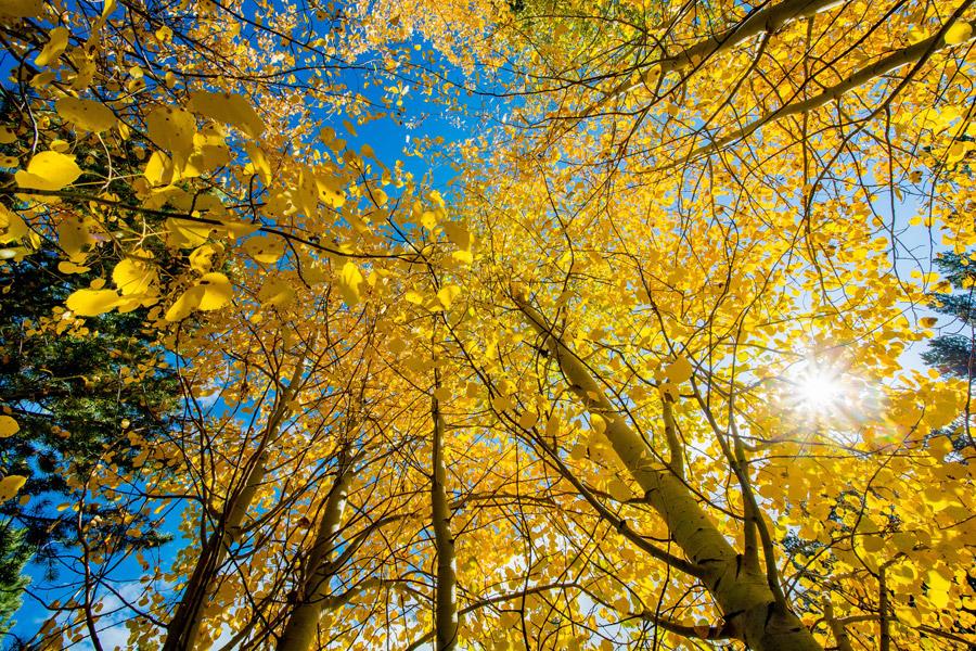 フリー写真 太陽の光と黄葉した木々の風景