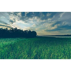 フリー写真, 風景, 自然, 河川, 草むら, ポーランドの風景, 雲