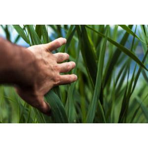 フリー写真, 人体, 手, 植物, 雑草