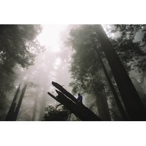 フリー写真, 風景, 森林, 樹木, 霧(霞), 倒木, 人と風景, アメリカの風景, カリフォルニア州