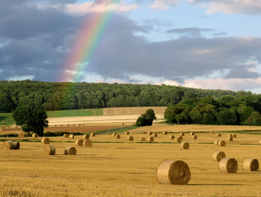 フリー写真 虹の架かる牧草地の風景